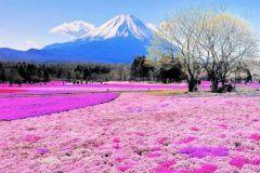 Cùng Korean Air khám phá vẻ đẹp bốn mùa tại Nhật Bản