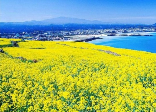Kinh nghiệm du lịch đảo Jeju Hàn Quốc
