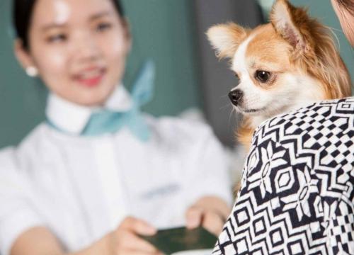 Có được mang thú cưng lên máy bay Korean Air?