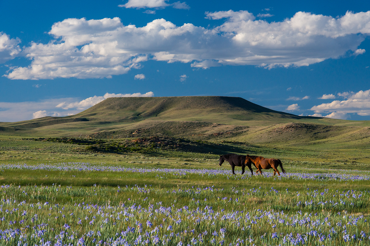 ve-may-bay-di-laramie-wyoming