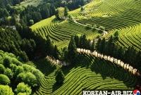 Vé Máy Bay Đi Yeosu Sucheon Hàn Quốc Giá Rẻ