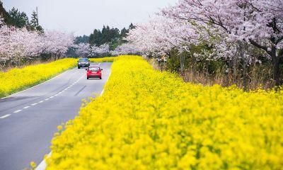Vé máy bay đi Jeju- thiên đường tình yêu