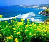 Vé Máy Bay Đi Jeju Hàn Quốc Giá Rẻ