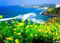 Vé Giá Rẻ Của Korean Air Đến Đảo Thiên Đường Jeju