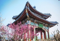 Kinh nghiệm mua vé máy bay đi Hàn Quốc giá rẻ