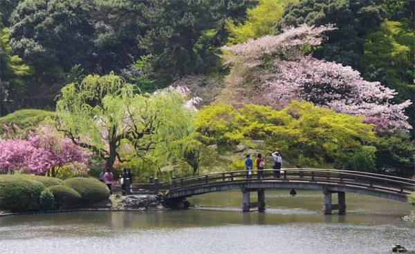 Vườn quốc gia Shinjuku Gyoen là nơi lý tưởng để hẹn hò, và tập thể dục